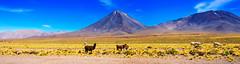 Chile 2013-2614 (sebtac) Tags: chile2013 chile 2013 outdoor reservanacionallosflamencos