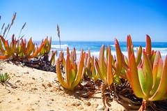 Glck - Luck (gerhard.boepple) Tags: portugal algarve europa meer sea mare impression verschwommen stimmung sommer morgen beach altlantic atlantik kste