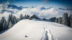 Above the clouds (helena678) Tags: winter mountains clouds snow trees forest tracks snoeshoe hiking switzerland schweiz