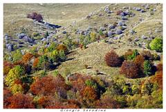 colori-d'-autunno (Giorgio Serodine) Tags: autunno montagna friuli alberi pini cespugli erba dalbasso tele canon allaperto calma colore