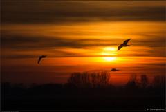 The birds fly away to the sun