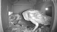 12.5.2016_1839_She Comes (Birder23) Tags: barnowlmalecall jasper didi barnowls barnowlnesthouse