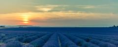 Provence sunset lavender [Valensole] (gaelmonk) Tags: flowers trees wedding sunset panorama sun france nature field fleurs de landscape soleil nikon village purple champs coucher violet lavender july panoramic arbres provence mariage paysage lavande juillet panoramique 2015 valensole