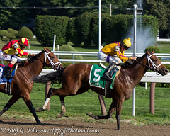 20140810_204_SaratogaRC.jpg (cct77gjj) Tags: newyork saratoga saratogasprings cavorting thoroughbredhorseracing saratogaracecourse iradortizjr 2015breederscuppreentry
