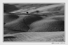 Tuscany Hills in Black and White (Alessandro Nenci) Tags: blackandwhite bw italy lights countryside san italia shadows country hill hills val tuscany montalcino pienza montepulciano toscana biancoenero colline dorcia quirico