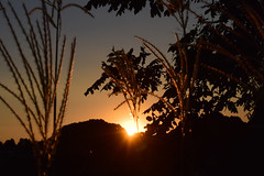 20151007_017_3 () Tags: silhouette