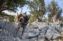 Adventure Dog Hikes.
