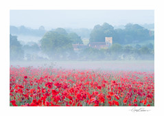 Midsummer Poppies (George-Edwards) Tags: landscape poppy poppies red flowers wild field land countryside rural outdoor hill village view church mist fog dawn sunrise light layers compton westberkshire summer daybreak morning georgeedwards nikon remembranceday armisticeday farm sky