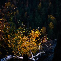 Restlicht (MadCyborg) Tags: nikon tsf laub herbst berge sandstein wandern bunt 307 felsen schsischeschweiz elbsandsteingebirge d600 2485vr