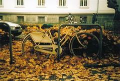 Herbst (Turikan) Tags: autumn fall herbst olympus chrome e6 dortmund fahrrad 35rc 200d wittner kaiserstrase
