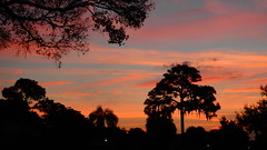 Sunrise Silhouette (Jim Mullhaupt) Tags: pictures camera morning pink blue red wallpaper sky orange sun color tree halloween weather silhouette yellow clouds sunrise landscape photography dawn photo nikon flickr florida snapshot picture palm exotic p900 tropical coolpix bradenton sunup nikoncoolpixp900 coolpixp900 nikonp900 jimmullhaupt