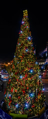 pier 39's 2015 christmas tree (pbo31) Tags: sanfrancisco california xmas november urban panorama holiday color tree night lights nikon over large christmastree tourist panoramic bayarea fishermanswharf pier39 stitched 2015 boury pbo31 d810