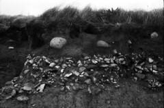 Rock Strata II (holtelars) Tags: blackandwhite bw film beach monochrome rollei analog denmark rocks asahi pentax takumar 28mm d76 spotmatic smc 400iso f35 filmphotography jobo spotmaticf fynshoved fototur autolab smctakumar rpx homeprocessing filmforever rpx400 atl1500 rolleirpx400 larsholte