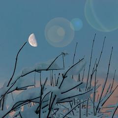 Selene stirs at dusk (Arni J.M.) Tags: xmas winter sky moon snow iceland dusk branches reykjavik flare sland selenestirsatdusk