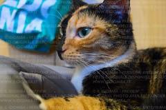 Nocciola (IlGiomba) Tags: cats fusa gattini animalidacompagnia