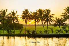 Alappuzha Backwaters (abhishek.verma55) Tags: alappuzha kerala backwaters sunset nature greenery veniceoftheeast tamron2470 canon550d flickr vacation travelphotography travel natureatitsbest sun coconuttree water alleppey india houseboats outdoor sea serene landscape photography cloudsstormssunsetssunrises ©abhishekverma