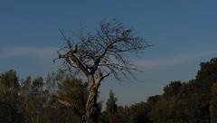 Autumn (Simy_Orifici) Tags: pianta verde autumn autunno herbst