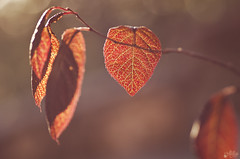 Luz de otoño (Ali Llop) Tags: autumn background beautiful beauty bright colorful environment fall foliage forest fresh golden leaf light natural nature orange outdoors park pattern plant rural season sunny tree vibrant woods yellow brown red