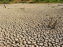 umwelt, medio ambiente, environament (charles.baldy) Tags: umwelt medioambiente environament cambioclimatico climatechange klimawandel trockenheit secco sequia
