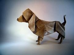 Basset Hound - Seth Friedman (Rui.Roda) Tags: origami papiroflexia papierfalten chien perro dog co cachorro salsicha basset hound seth friedman