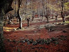 Otoño encendido en los bosques de Gorbeia (tunante80) Tags: bizkaia montaña mendia monte orozko hayedo arboles bosque basoa forest euskadi vizcaya naturaleza nature mountain wow europe spain españa europa nationalgeographic euskalherria paisvasco otoño autumn lonelyplanet