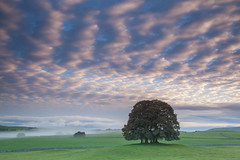 Airton (David Speight) Tags: yorkshire yorkshiredales nationalpark northyorkshire mist misty malhamdale malham meadows morning sunrise scenic scenery landscape landscapes canon countryside clouds