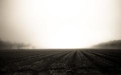 Louisiana sunrise (Mr. Greenjeans) Tags: zion2016santa fe pasture field sepia fog foggy trees openfield louisiana