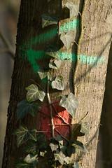 ckuchem-7330 (christine_kuchem) Tags: wald waldwirtschaft wirtschaft holzwirtschaft holzgewinnung holz baumstmme bume geschft gewinn ertrag naturschutz spuren waldmaschinen maschinen reifenspuren verdichtet bodenverdichtung boden belastung