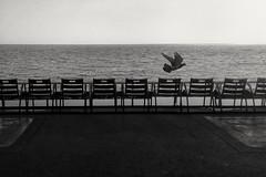 Promenade des Anglais, Nice, France, 21 octobre 2016. (ggugg) Tags: promenade promenadedesanglais nice nizza cotedazur costaazzurra francia france frenchriviera lungomare mare mediterraneo pigeons piccioni uccelli sedie 2016