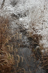 Snowy banks (marensr) Tags: creek grasses snow snowy winter nature water west ridge preserve chicago