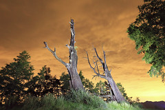 IMG_3728-3729_Overlay (Ethene Lin) Tags: 新中橫 塔塔加 夫妻樹 夜景