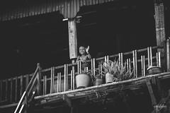 Petite fille souriante nous saluant sur les rives de Tonl Sap (Aurlie Jouanigot) Tags: lac tonlsap pilotis floatingvillage people cambodge villageflottant lake maison northouest cambodia tonlsap