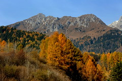 Autumn in Valcamonica (annalisabianchetti) Tags: vallecamonica autumn autunno alps italy paesaggio landscape leaves forest boschi mountains montagne trees colors