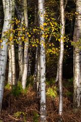 RSPB Sandy (Malcolm_Graham) Tags: autumn colours autumncolours sandy thelodge