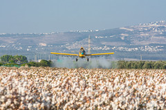 Cotton Definition (Yovel Rodoy) Tags: cotton definition israel nature agriculture agri thrush airfield airport jet airplane aircraft spraying