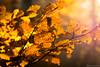 Lightfall (klickpix70) Tags: autumn herbst lonesome einsam baum nikon d7200 85mm clouds landschaften landscape light sky sonne wolken outdoor pfad wasser explore discovery feld himmel landschaft colorful herbstzeit blätter leafs lightfall licht lichtfall laub pflanze schärfentiefe bokeh blatt blüte