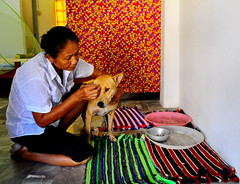 ,, Mama Maintenance ,, (Jon in Thailand) Tags: mama dog k9 no1wife thebingoroom red orange yellow pink green rugs nikon nikkor d300 175528 thai woman maintenance thedogpalace jungle junglejournalism street streetphotographyjunglestyle throwrugs dogbowl tray purple blue patterns colors 15thsecondhandheld littledoglaughedstories