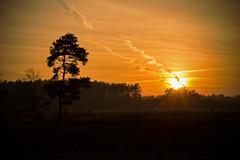 Autumn sunset (Explored) (iwona.kilichowska) Tags: tree landscape fields sunset outdoor nature sun scenery gold