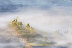 The Songan Village (eggysayoga) Tags: pinggan songan village desa sunrise misty mist fog foggy bali indonesia tree green foliage fujifilm fuji xt1 sigma 70200mm os dg adapter adaptor nikon kintamani spot
