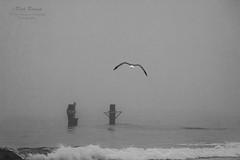 Towards the Fog (White Balance Imaging Photography) Tags: beachocean birds fauna landscapeseascape nature oceanview places seaguls