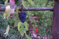 Montalcino (moscouvite) Tags: heleneantonuk italie toscana voyage sonydslra450 paysage