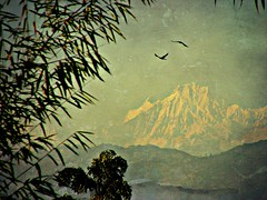 NEPAL,   Blick Richtung Anapurna , im Hotel Himalaya in Kathmandu, 15015/7642 (roba66) Tags: nepalimhotelhimalayainkathmandu reisen travel explore voyages urlaub visit roba66 nepal asien südasien asia city stadt capitol kathmandu himalaya gebirge mountain berge range naturalezza mountains montana felsen rock rocks gletscher eis ice
