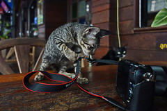 Lesson No 1: adjusting the neck strap (N808PV) Tags: camera cat neck eos kitten m strap stray lesson adjusting rx100