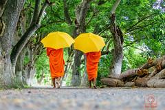 Two monks (www.dinhstudio.com) Tags: travel two people orange color tree walking walk monks backgroud travaling