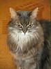 _MG_0621 (d_fust) Tags: cat kitten gato katze 猫 macska gatto fust kedi 貓 anak katt gatito kissa kätzchen gattino kucing 小貓 고양이 katje кот γάτα γατάκι แมว yavrusu 仔猫 का skorpi बिल्ली बच्चा