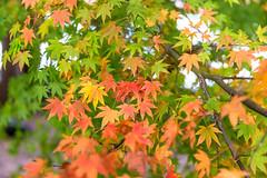 (Digital_trance) Tags: autumn fall landscape maple fallcolors taiwan autumncolors     taroko       tarokonationalpark            fushoushan   14