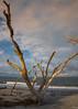 Folly Beach Driftwood (Vitaliy973) Tags: ocean wood summer beach sc island nikon southcarolina atlantic driftwood carolina send d750 fx follybeach atlanticocean folly jamesisland