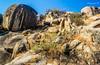Untitled (Mayank Bhatnagar) Tags: rocks grasses slope rajasthan rockscape landscapedetail beautifulrocks sariskanationalpark bairath aravallis