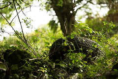 Tyred Out (Steve Vallis) Tags: wood plants green forest vegetation tyre