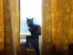 Yawning Myshka (GrusiaKot) Tags: home cat ukraine kharkov gatto kharkiv ucraina